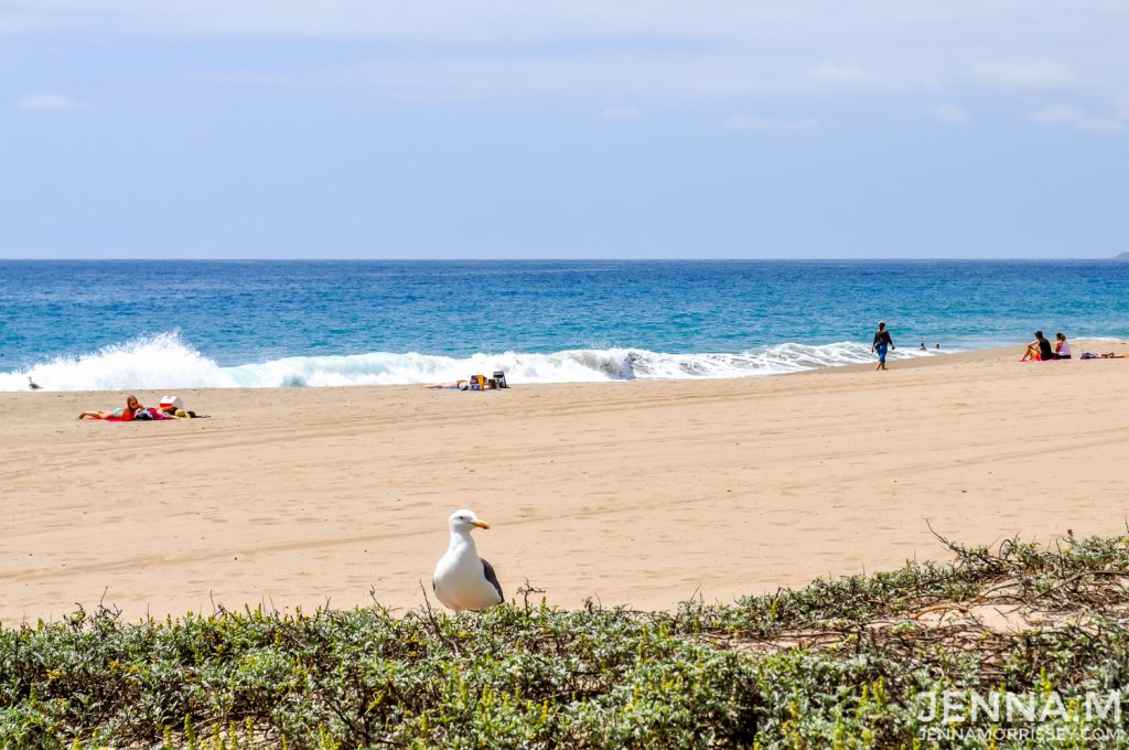 Seagull on Point Dude Beach