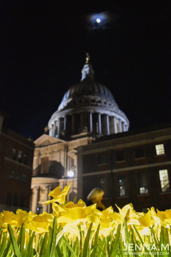 Marie Curie Daffodils at St Pauls Cathedral